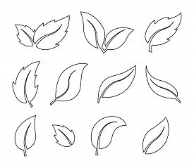 Vector Set Of Plant Leaves, Thin Line, Empty Outline Isolated On White Background, Flat Modern Desig