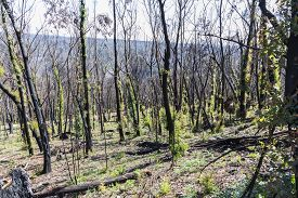 Tree Regeneration In The Blue Mountains After The Australian Bush Fires