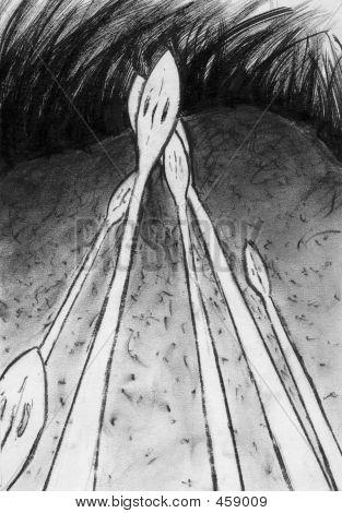 Hand Drawn Illustration