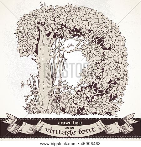 Fable forest hand drawn by a vintage font - D