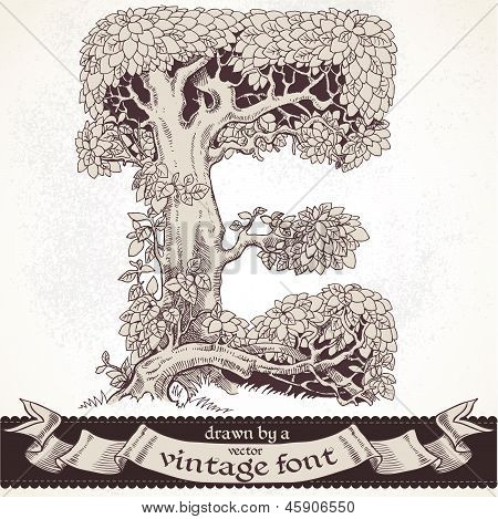 Fable forest hand drawn by a vintage font - E