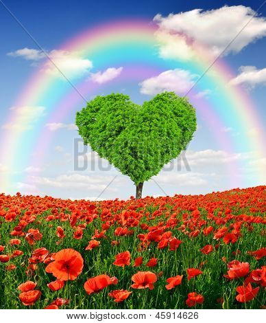 rainbow above the poppy field with tree from the shape heart