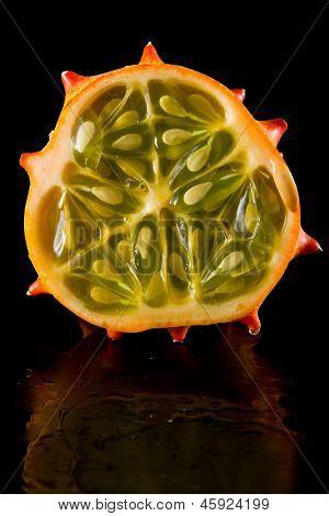 Horned Mellon