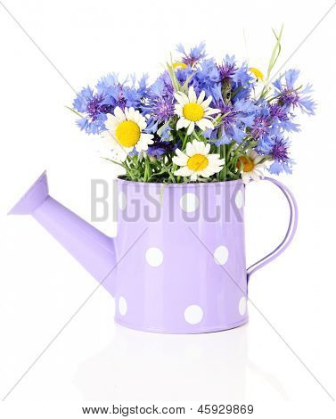 Bouquet of cornflowers and chamomiles in watering can, isolated on white poster