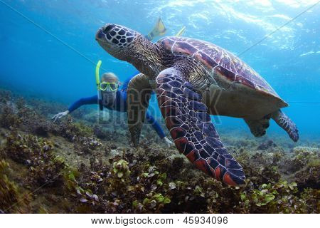 Young lady snorkeling and diving on a breath hold by a big turtle