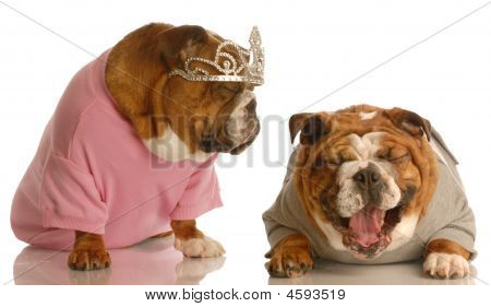 english bulldog laughing at another dog dressed up with tiara on poster