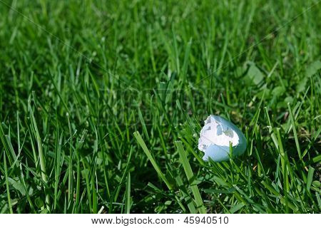 Wild bird's eggshell on grass