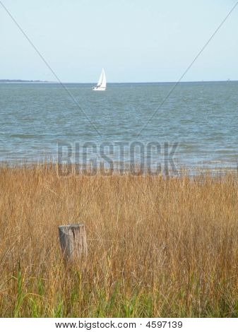 Sailboat Near The Marsh