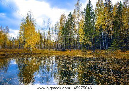 Осенние деревья, отражение в воде