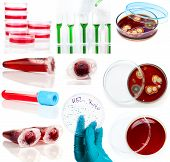 set of laboratory supplies. Petri dish Spectrophotometer quvettes blood test test-tube poster