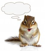 Funny talking chipmunk on white background with reflection poster