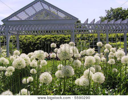 weiße Garten