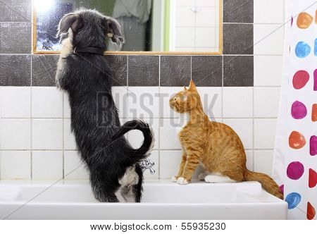 Animals At Home Dog And Cat Playing Together In Bathroom