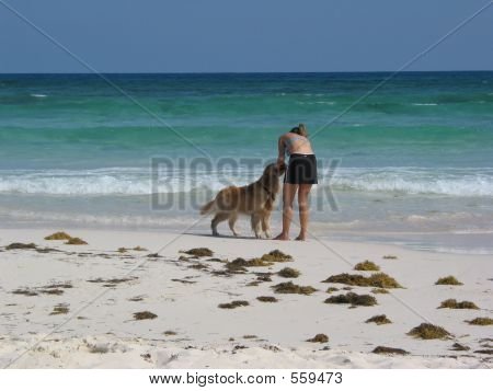 Dog And Human Meet On The Sand And The Sea Of Cozumel, Mexico