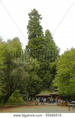 Muir Woods National monument nesr San Francisco, California