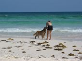 a dog lover enjoys her pet on the beach with the blue-green ocean. poster