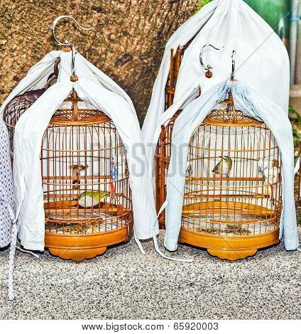 Birds In A Cage At The Birds Market In Hongkong