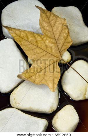 Dried Leaf And Stone