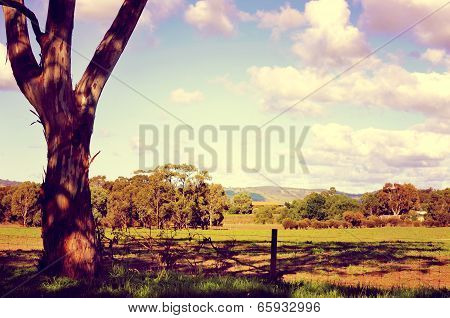 Retro Sunset Filter Style Australian Country Scene With Eucalyptus Gum Tree In Forground. Taken At B