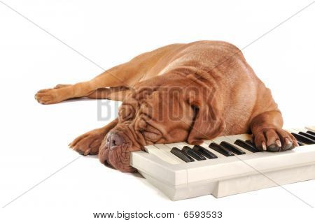 Maestro Sleeping