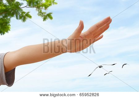 Woman Arms And Flying Bird