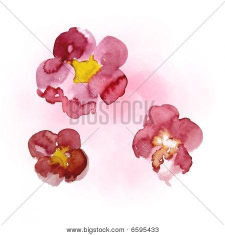 Watercolor Painting Of Sakura