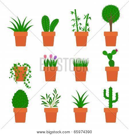 vector set of plants in pots