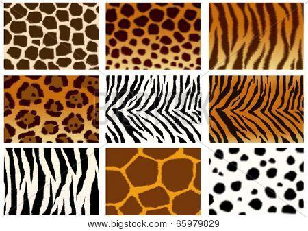 Set of animals skins textures