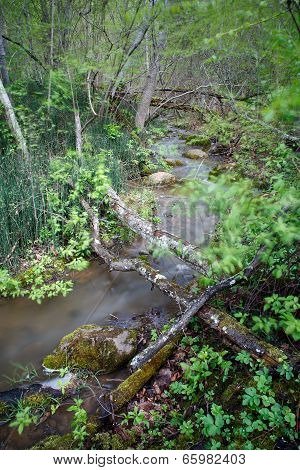 Small River In Wild Forest