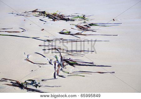 Seagrass Pattern On Sandy Beach