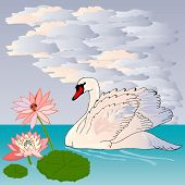 Graceful and graceful Swan is swimming in the lake at sunset poster