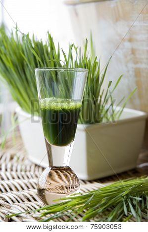 Fresh Wheatgrass With Wheatgrass Juice