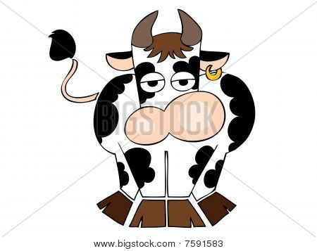 Dairy cow with golden earring.
