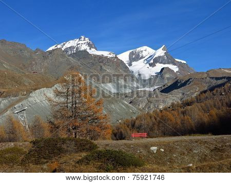 Colorful Larch Forest And Snow Capped Allalinhorn