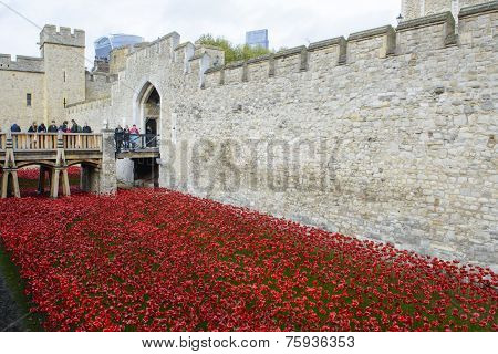 LONDON, UK - NOVEMBER 08: People admiring art installation by Paul Cummins at Tower of London. November 08, 2014 in London. The ceramic poppies were planted to mark the centenary of WWI's outbreak.