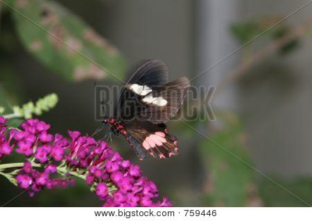 Butterfly 048