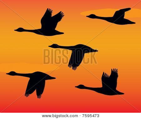 Silhouette Flock of Geese