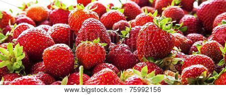 Strawberry Panorama.