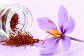 Close up of saffron flower and dried saffron spice  poster