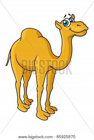 Fun cartoon camel animal character