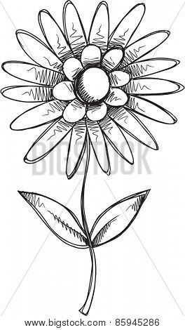 Doodle Sketch Flower Vector illustration Art