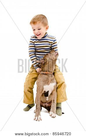 Boy playing with a puppy pit bull