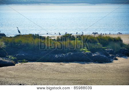 Cormorants, egrets and gulls on the shore of the river