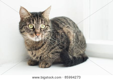 portrait of a domestic cat sitting on the window