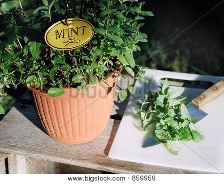 mintplant