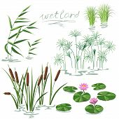 Set of wetland plants. Simplified image of reed water lily cane and carex. poster