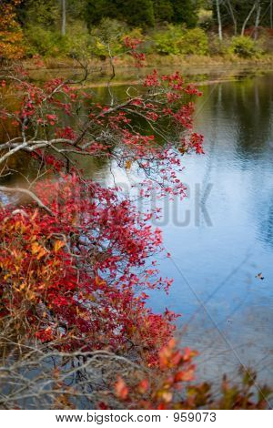 Foliages And Pond 014