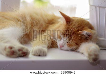 The Cat Is Sleeping On A White Windowsill
