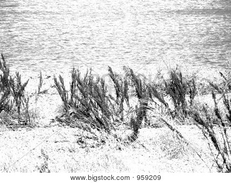 Winter Beach In Black And White