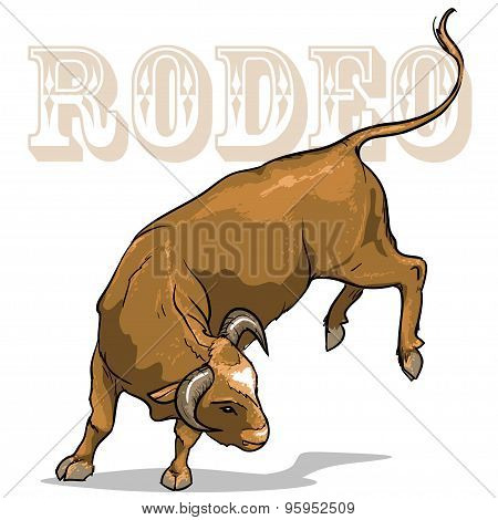 Rodeo Bull, Isolated